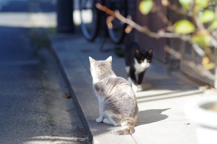 外ですれ違う二匹の猫