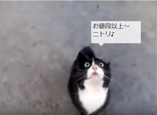 「怪しいネコでは・・・」としゃべるハチワレ