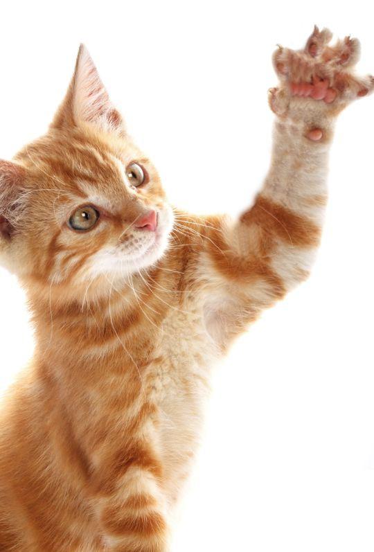 手を伸ばす子猫