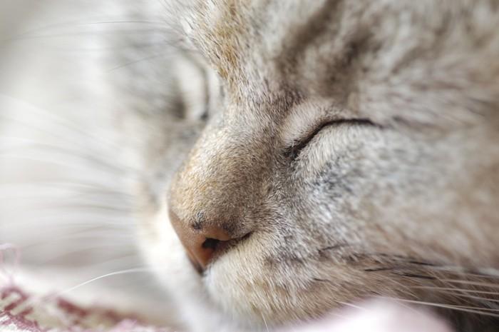 ケアを喜ぶ猫