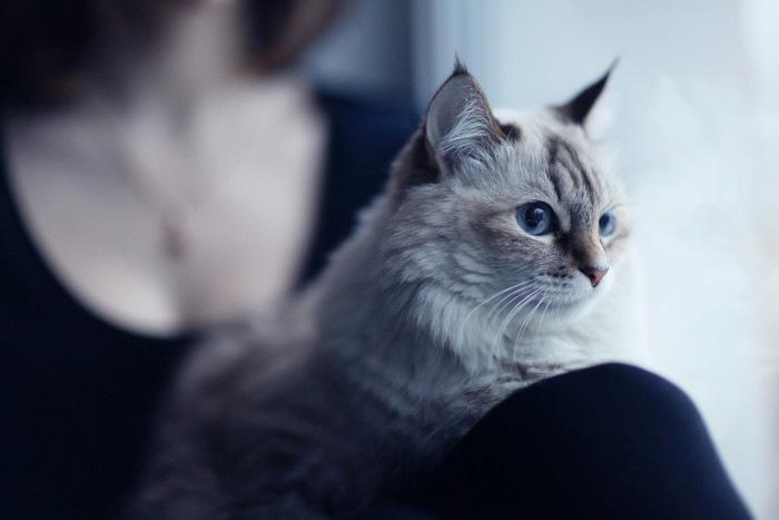 膝の上に座る猫の写真