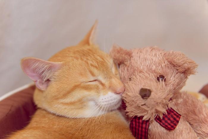 茶色の猫と熊のぬいぐるみ