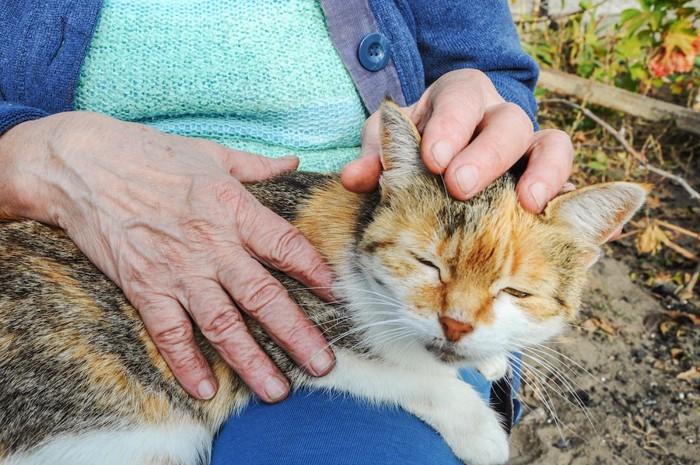 飼い主の膝に乗って甘える猫