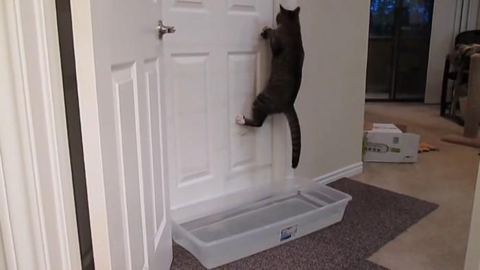 ドアをあけようとする猫