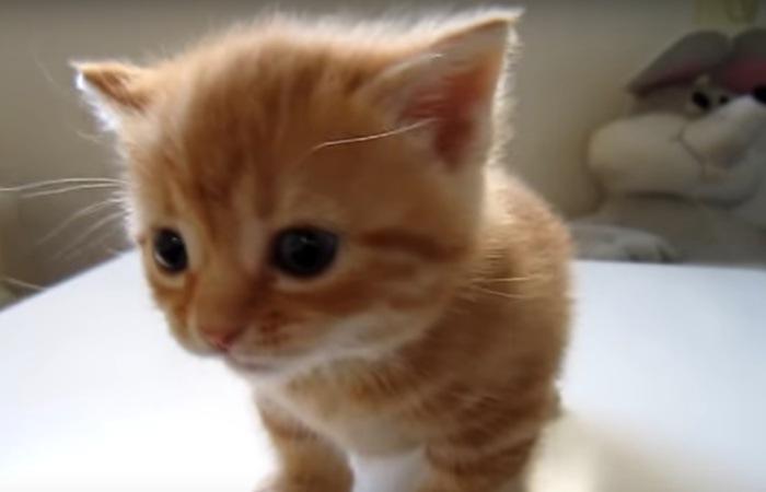 不安そうにしている子猫