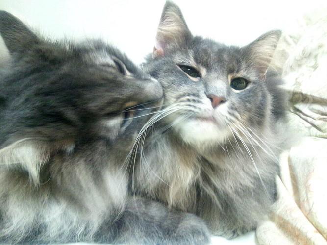 2匹の猫毛繕い