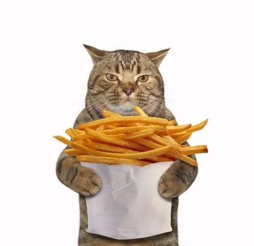 猫とフライドポテト