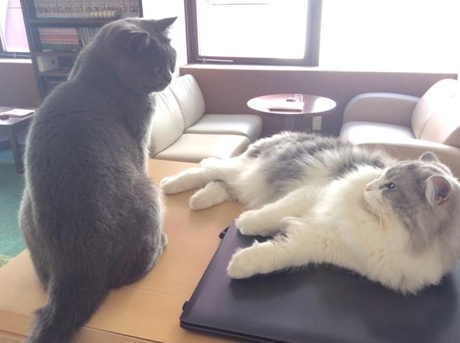 愛知栄の猫カフェキャットストリート