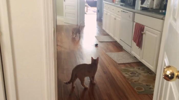 姉妹猫よりはやい