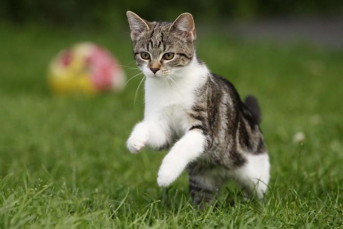 公園で遊ぶ猫