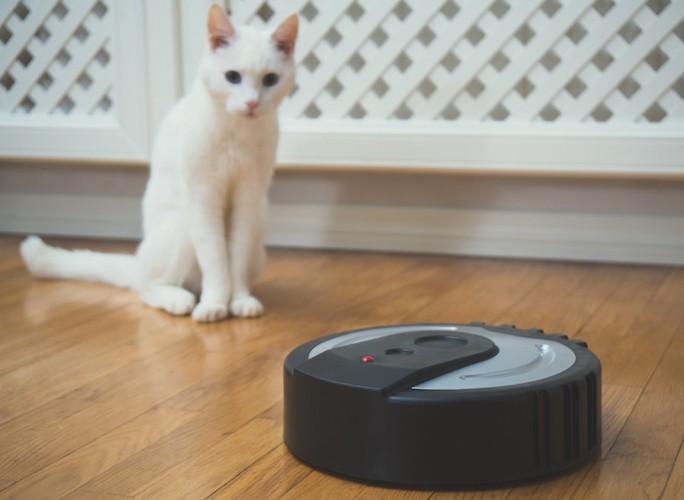 お掃除ロボットを見つめる白猫