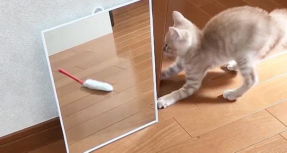 反対側の鏡の後ろを探る子猫