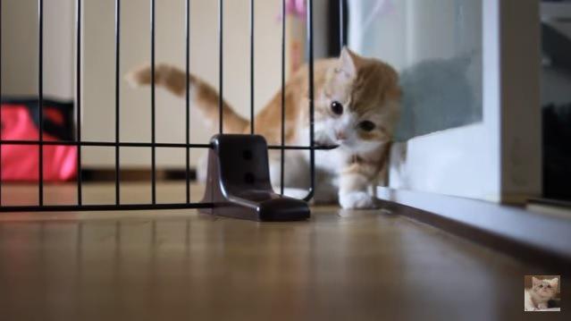 柵から頭を出す猫