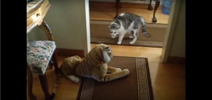 トラのぬいぐるみと猫