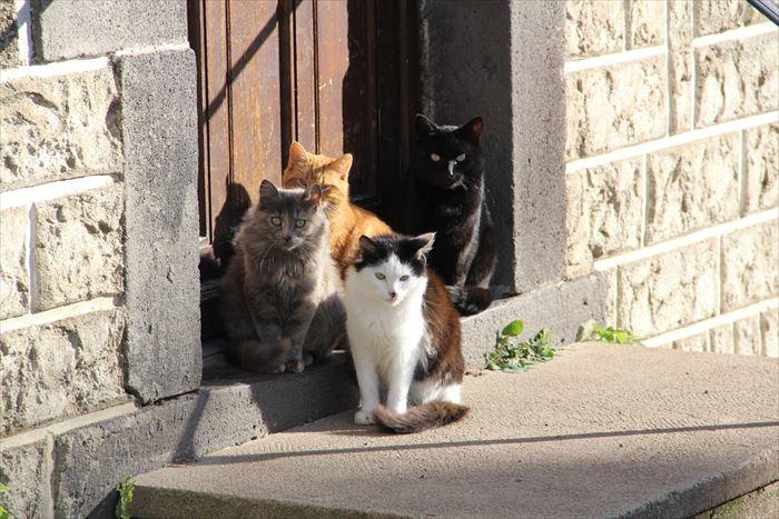 玄関先の猫たち