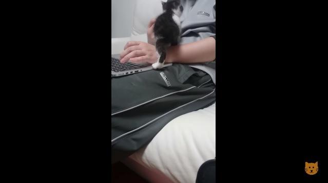 飼い主の膝に登る子猫