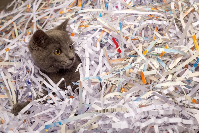 シュレッターの紙と猫