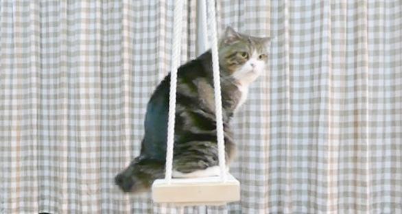ブランコにおすわりする猫