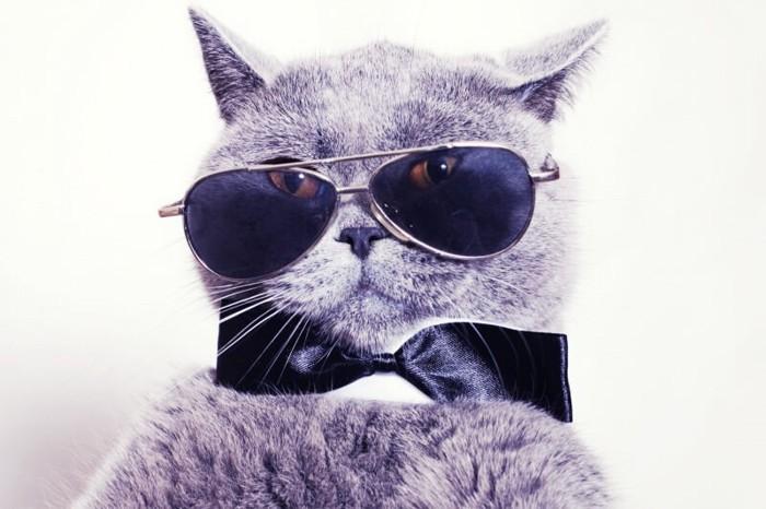 猫に向けられたフラッシュを防ぐサングラスイメージ