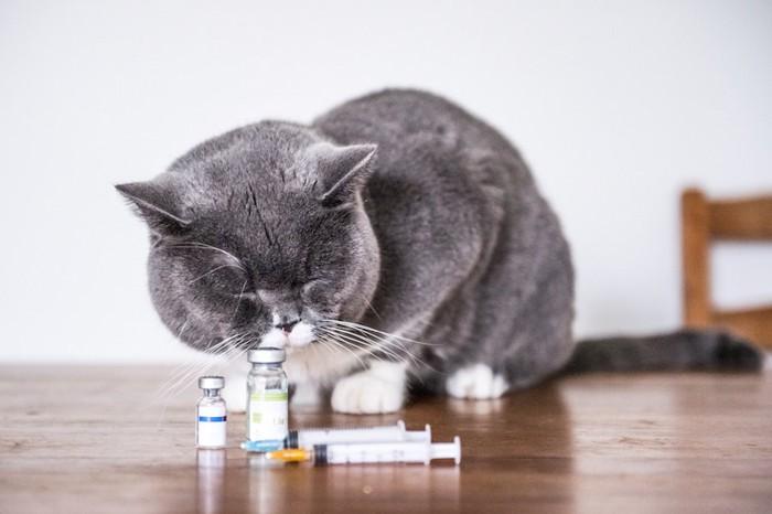薬のビンに顔を近づけるグレーの猫
