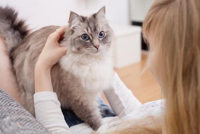 膝に乗る猫と女性の写真