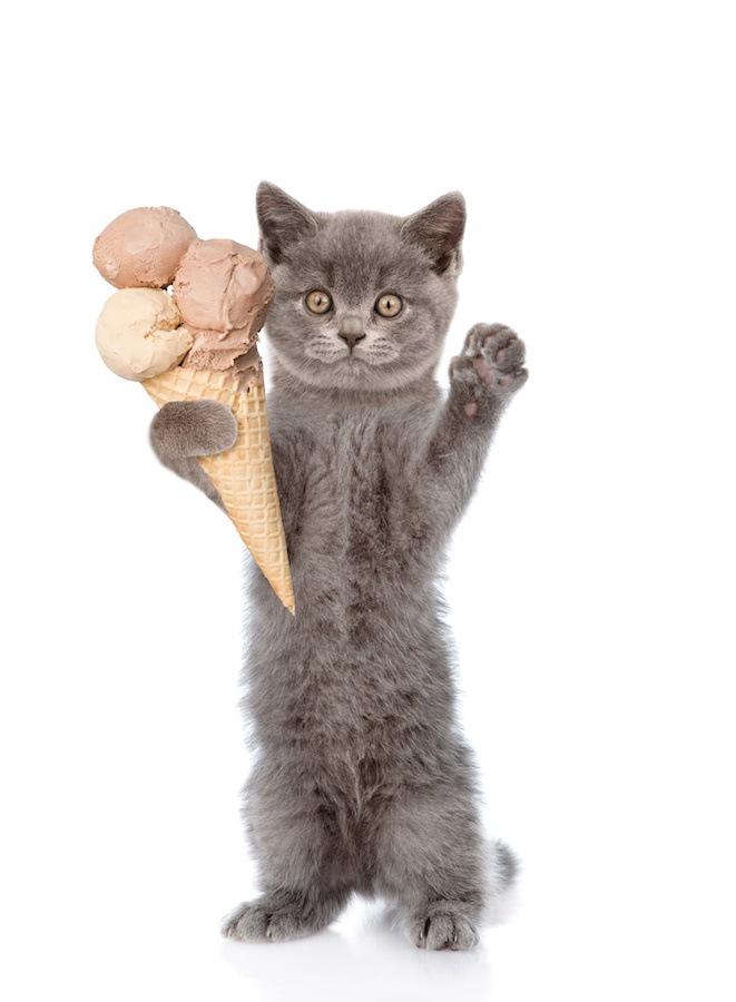 アイスと猫
