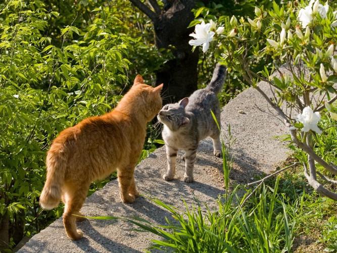 挨拶をする猫達