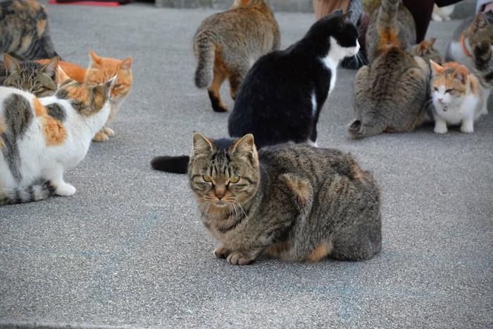 人のそばに集まる青島の猫たち