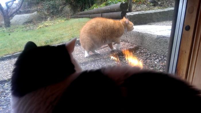 野良猫をみる猫