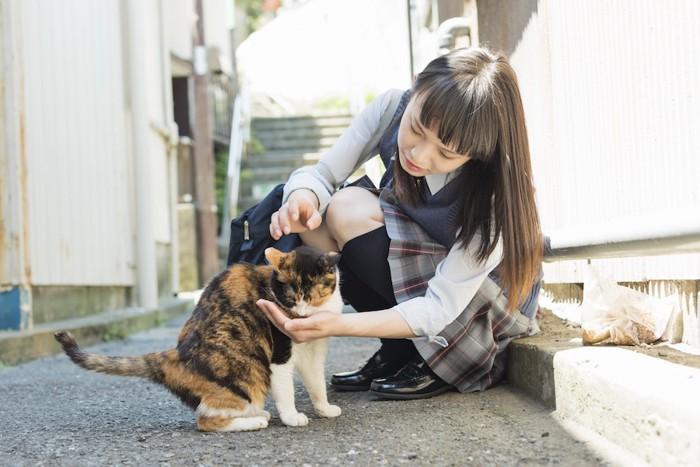 外猫に餌をあげる女性