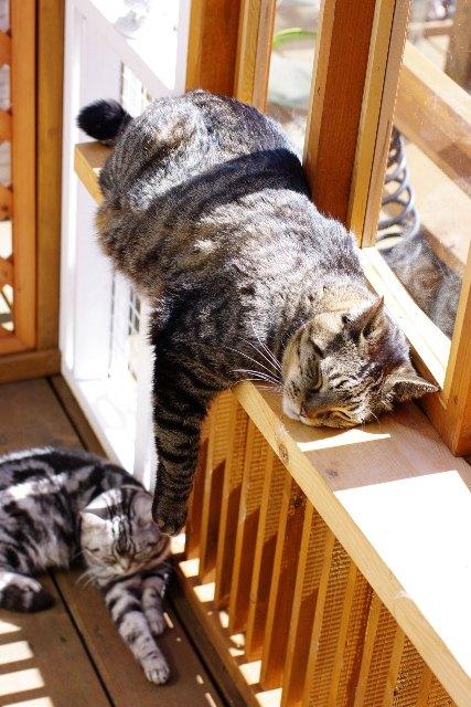 猫専用サンルームと猫