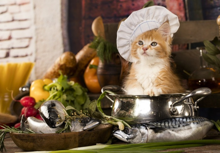 料理する猫
