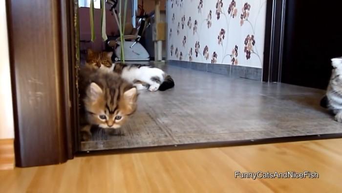 成猫と子猫