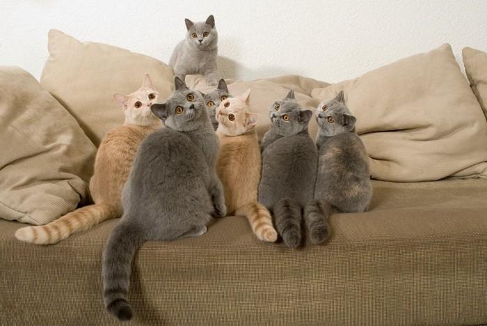 座ってこちらを向く猫たち