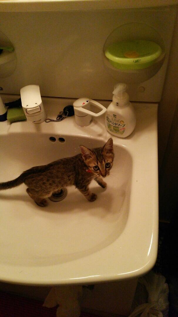 洗面所の猫