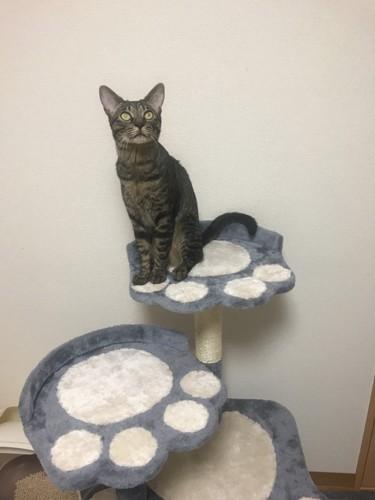 猫の足跡の台の上のぽっけ