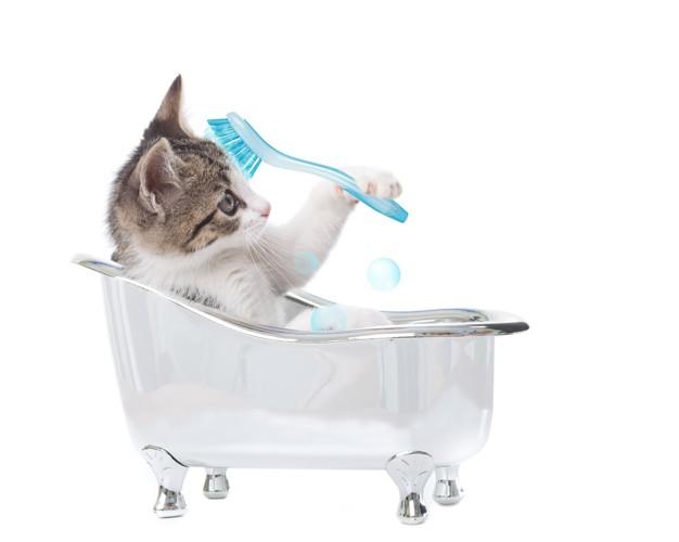 シャンプーをする猫