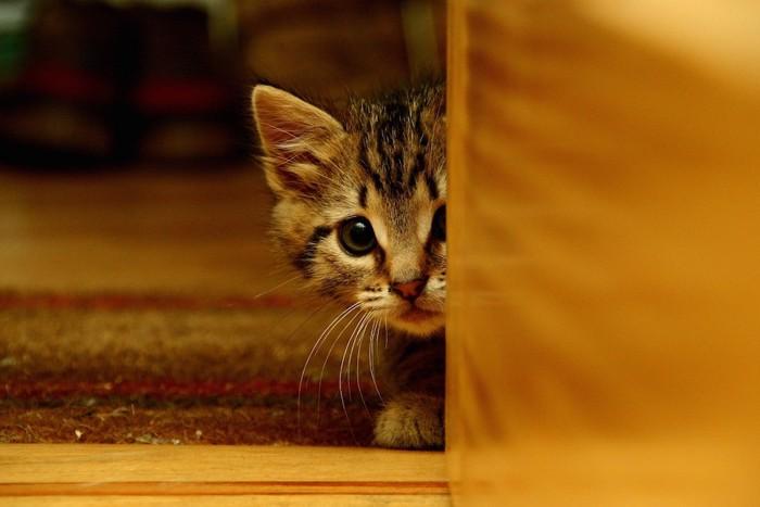 扉の影からこちらを覗く子猫