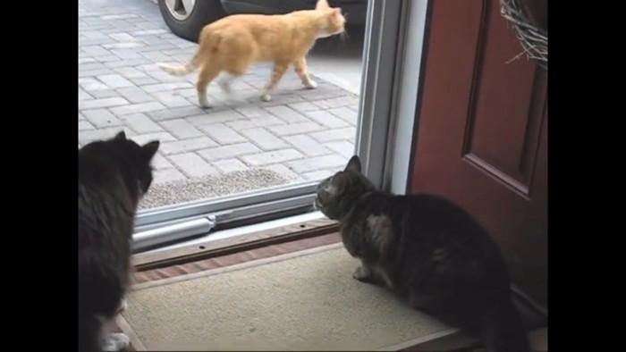 逃げる外猫