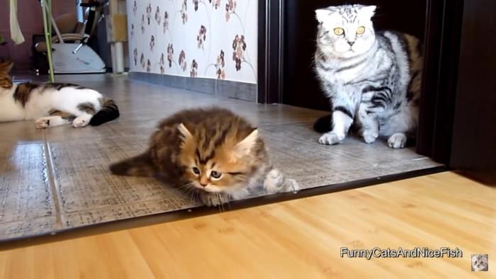 落ち込む子猫
