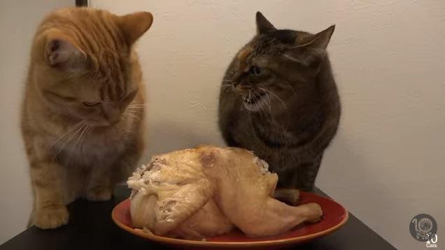怒る猫と怒られる猫