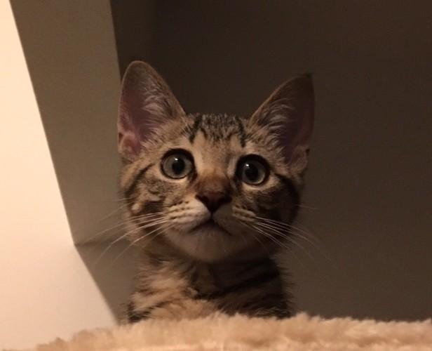 子猫のころの猫の写真