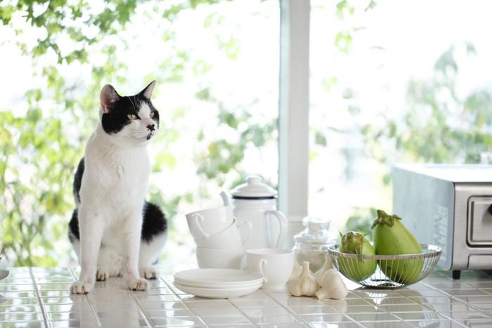 キッチンの上に座る猫