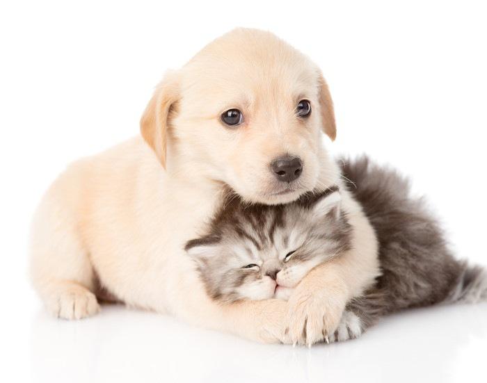 子猫を抱きしめている子犬の写真