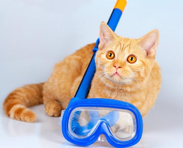 泳ぐセットと猫