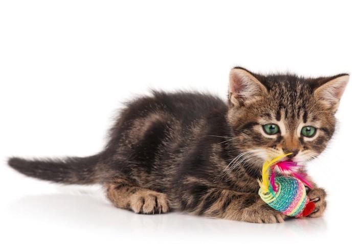 ねずみのおもちゃを掴んでかじる子猫
