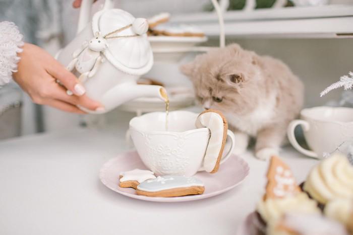 紅茶をじっと見ている猫