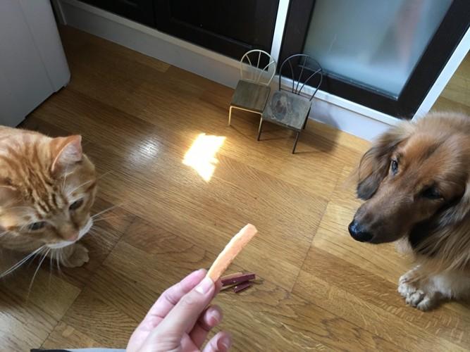 おやつを見つめる犬と猫