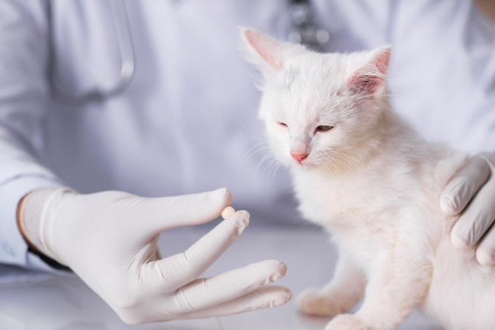 薬を飲まされそうな子猫