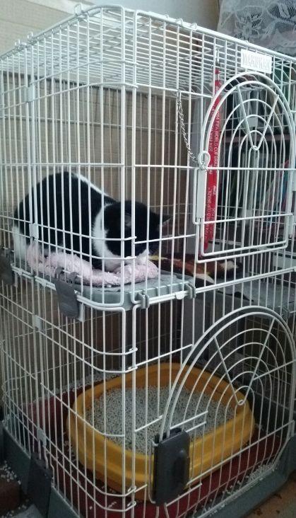 ケージで休憩中の猫